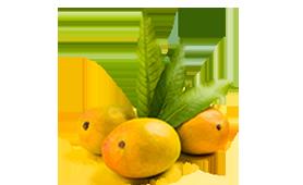 Mango-alphonso