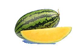 Watermelon-yellow